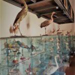 Museo ornitologico Barone Mendola Favara 03
