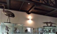 Museo ornitologico Barone Mendola Favara